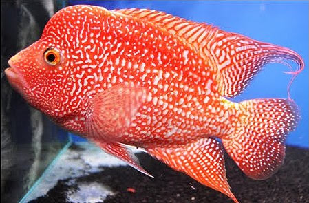 Welcome To Javed Fisheries We Are Breeder Wholesale